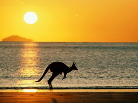 canguro en playa australiana
